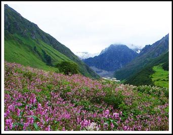 Valley of flowers trek details